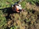[sujet déplacé en section agriculture] planter du blé d'hiver Dsc01013
