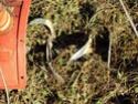 [sujet déplacé en section agriculture] planter du blé d'hiver Dsc01015