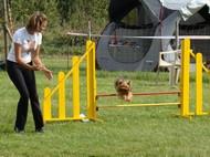 concours agility laurac 21 septembre Sflaur10