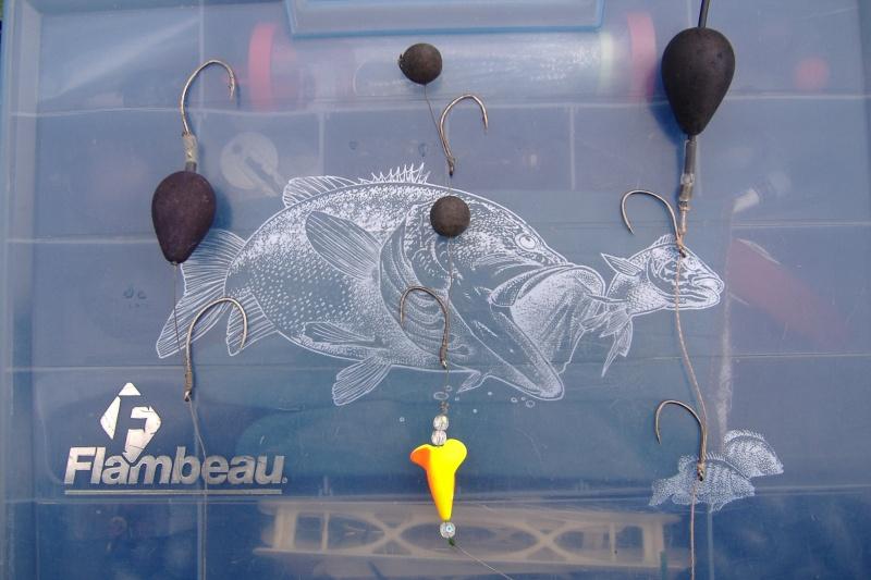 Comment pêcher le silure aux vers décollés? Dscf0130