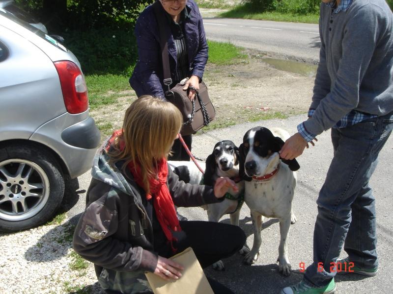 PONGO - ariégeois 7 ans - Refuge Spa de Thierville (55) Dsc00011