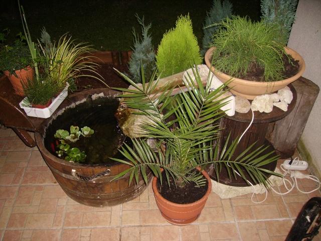 Votre photo pour Novembre 2008 Pict0915