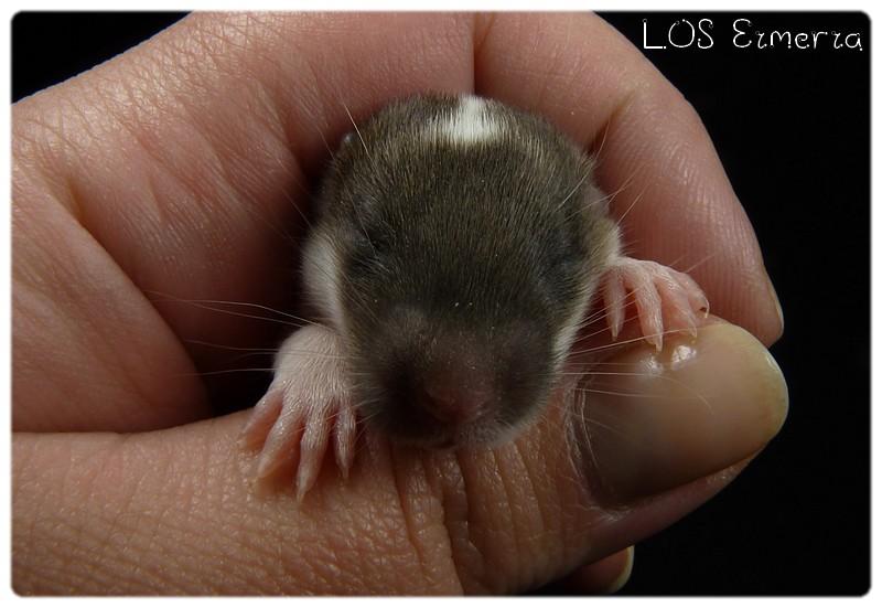 LOS Bill ♥♥♥ IND Geisha - Page 6 P1180422