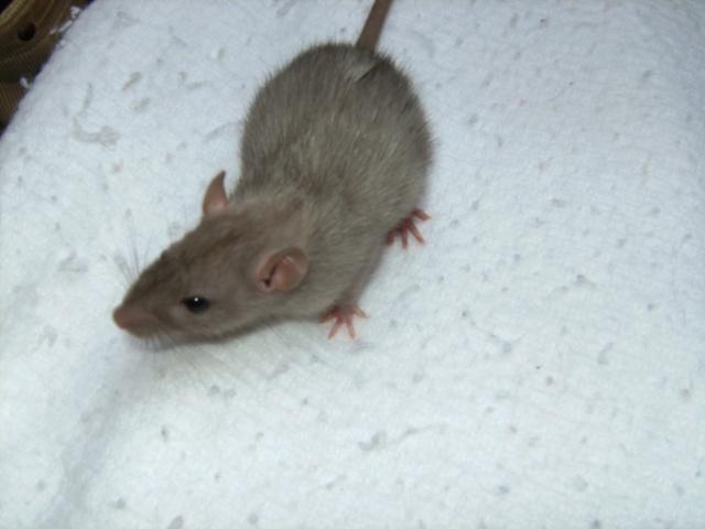 Couleur d'un raton Pict0428