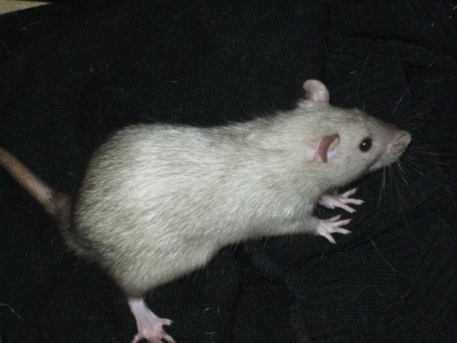 Couleur d'un raton Pict1132