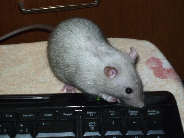 Couleur d'un raton Pict1133