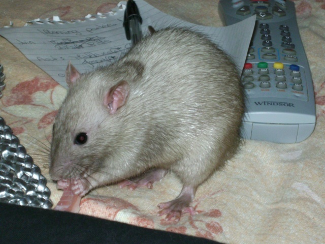 Couleur d'un raton Pict2511