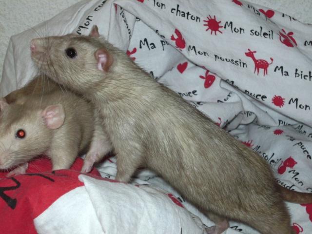 Couleur d'un raton Pict5731