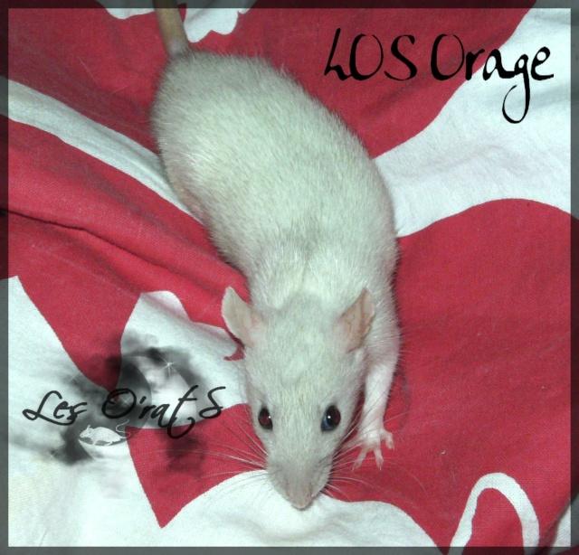 Couleur d'un raton Pict7719