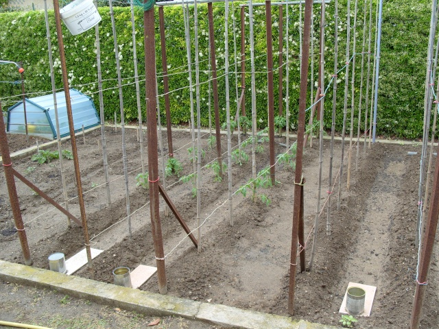 nouvelles plantations de légumes S1050126