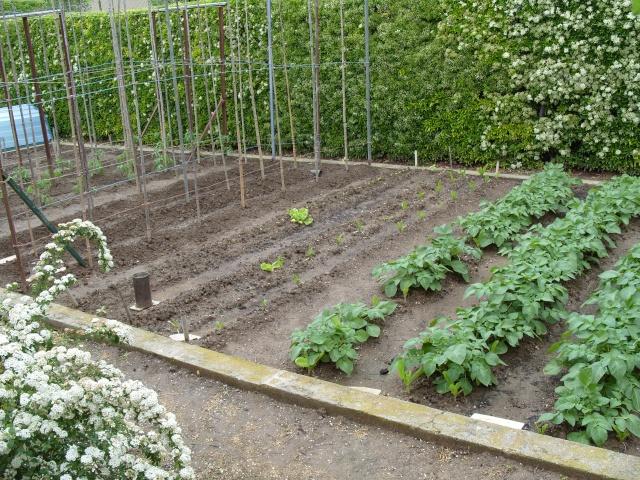 nouvelles plantations de légumes S1050127