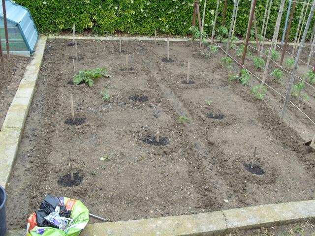 nouvelles plantations de légumes S1050128