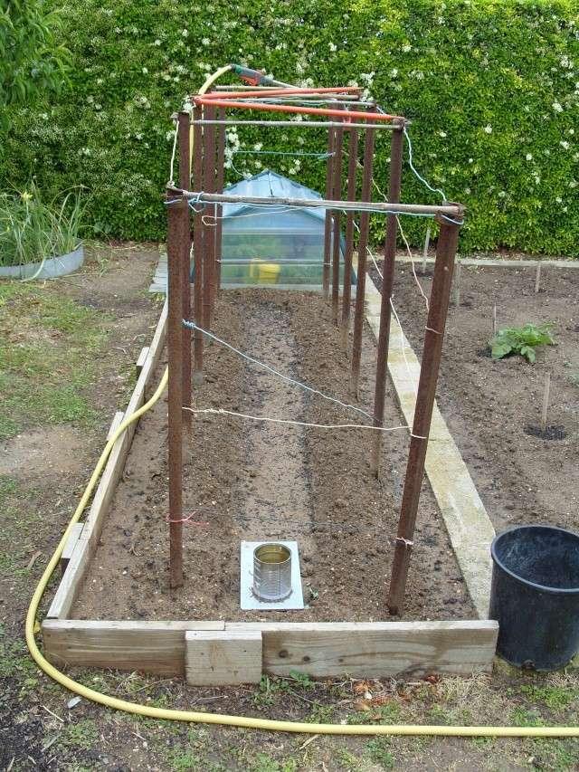 nouvelles plantations de légumes S1050129
