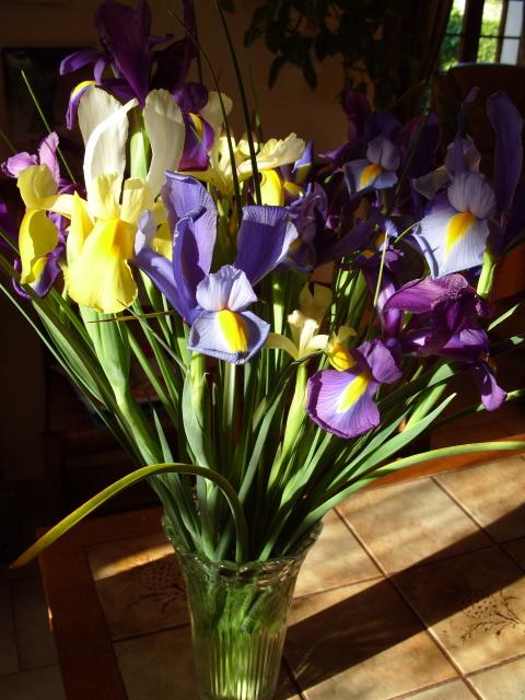 Iris de Hollande S1050164