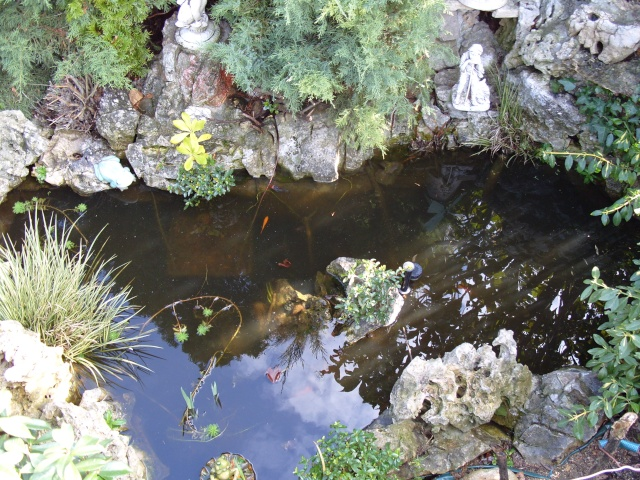 Le bassin et sa rocaille S1050210
