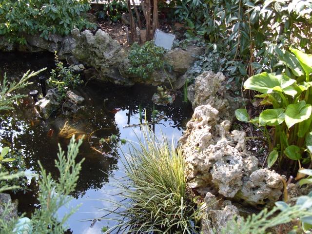 Le bassin et sa rocaille S1050214