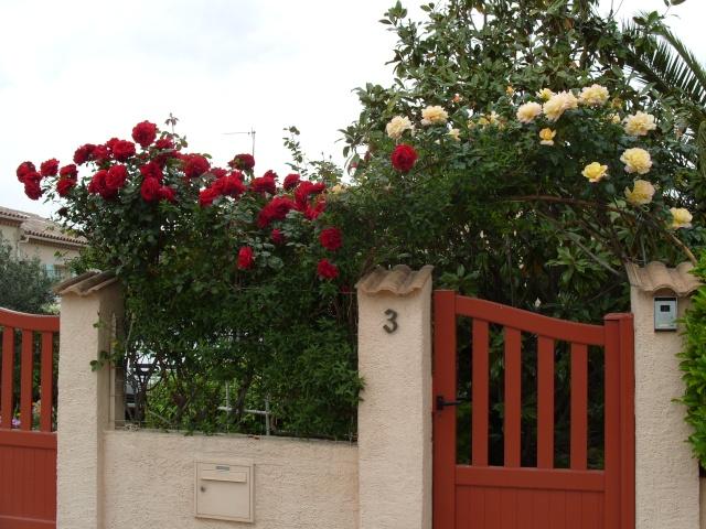Petit album de roses S1050313