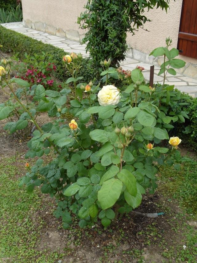 Petit album de roses S1050327
