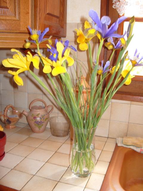Iris de Hollande S1050337