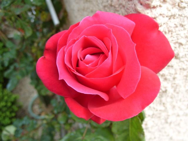 Petit album de roses S1050342