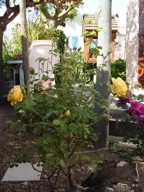 Petit album de roses S1050410