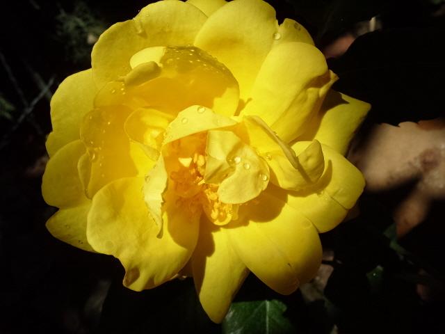 Petit album de roses S1050435