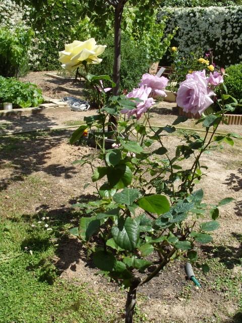 Petit album de roses S1050438