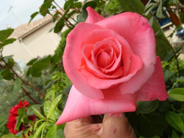 Petit album de roses S1050447