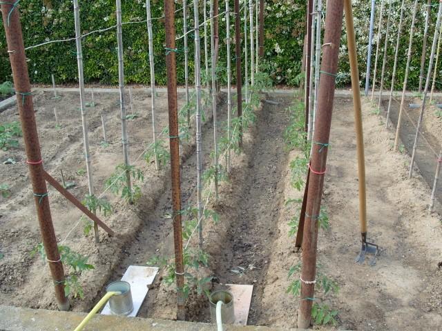 nouvelles plantations de légumes S1050458