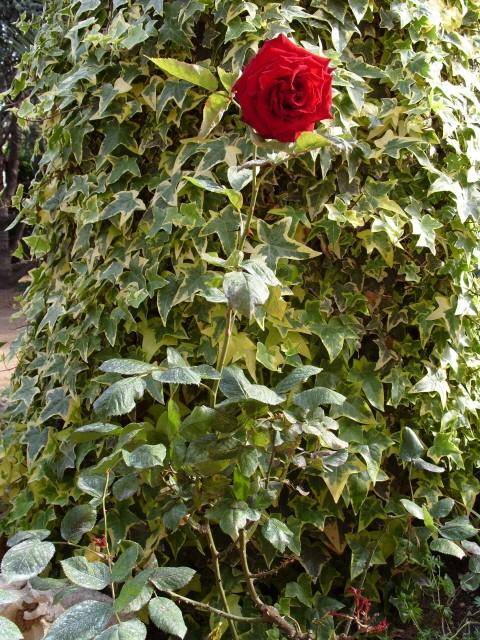 Petit album de roses S1050542