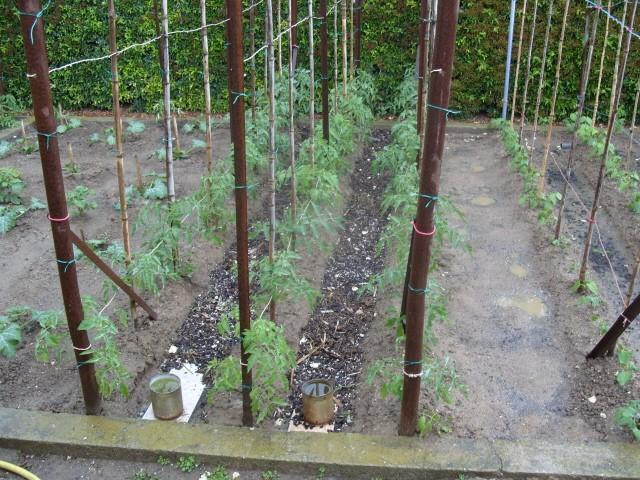 nouvelles plantations de légumes S1050632