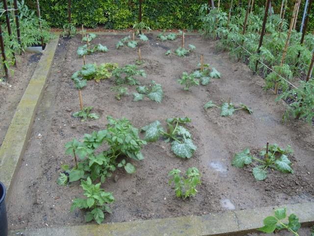 nouvelles plantations de légumes S1050634