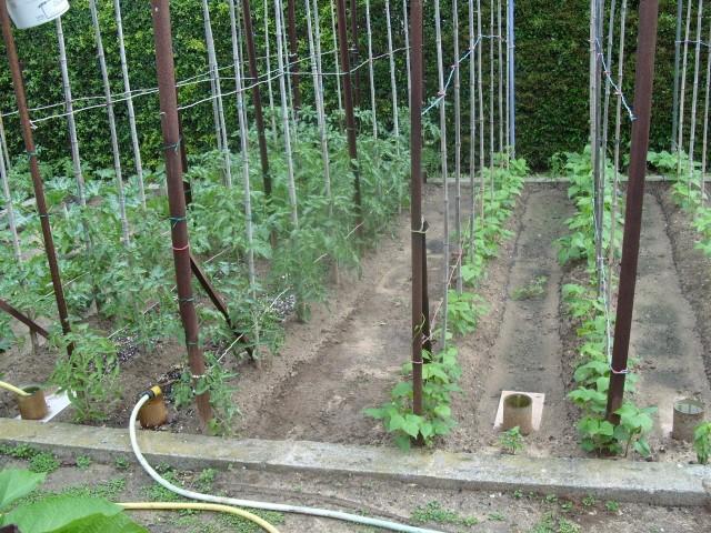 nouvelles plantations de légumes S1050728