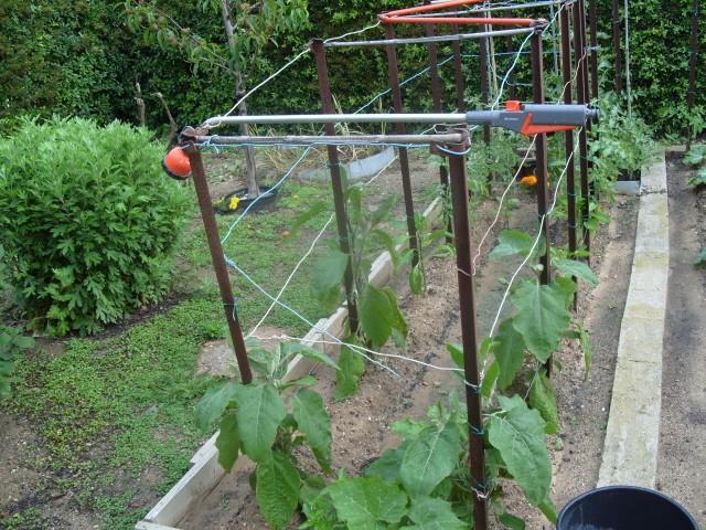 nouvelles plantations de légumes S1050730