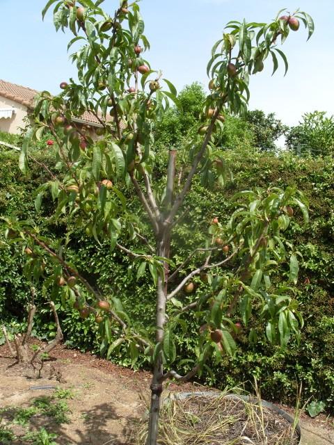 nouvelles plantations de légumes S1050732