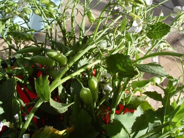 Plante pour tortues S1050821