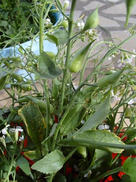 Plante pour tortues S1050823