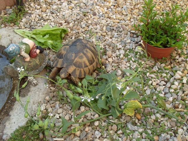 Plante pour tortues S1050824