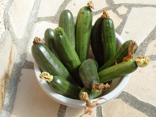 nouvelles plantations de légumes S1050826