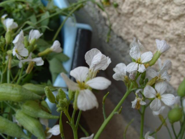 Plante pour tortues S1050830