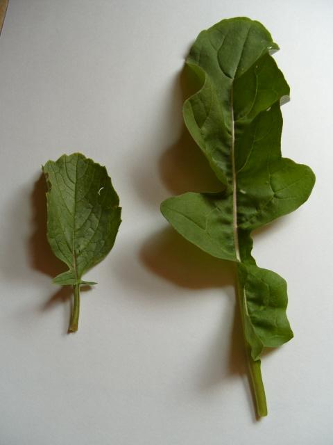 Plante pour tortues S1050831