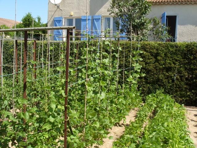 nouvelles plantations de légumes - Page 2 S1050931