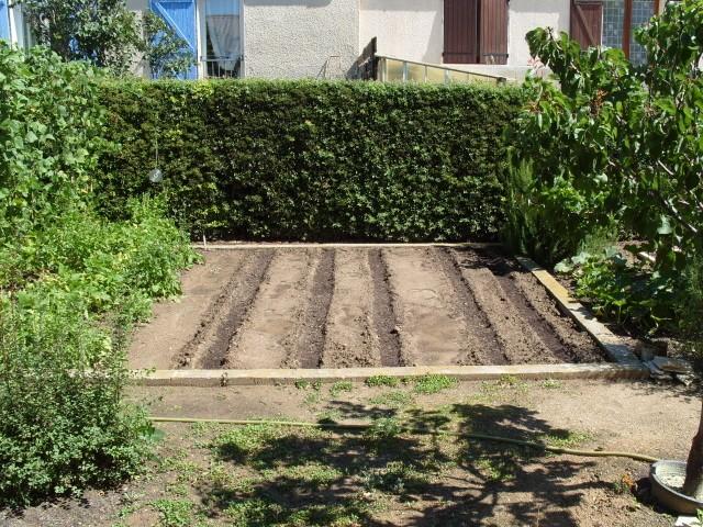 nouvelles plantations de légumes - Page 2 S1051054
