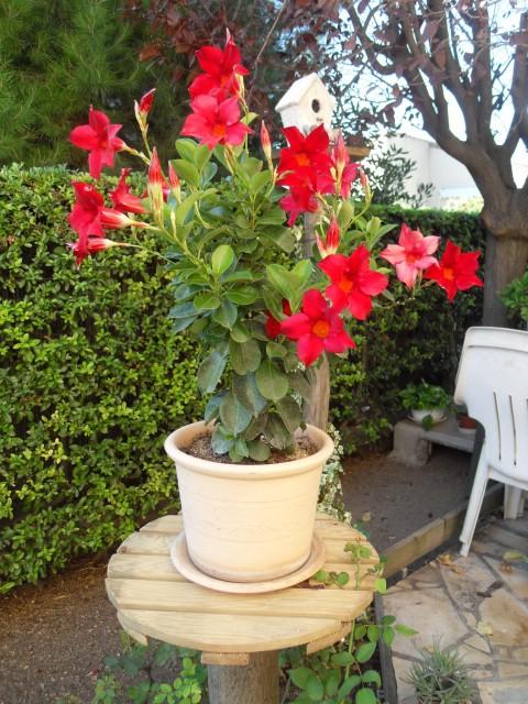 floraisons d'octobre - Page 5 Sdc10033