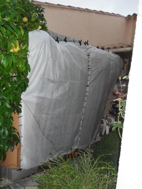 les agrumes Sdc10138