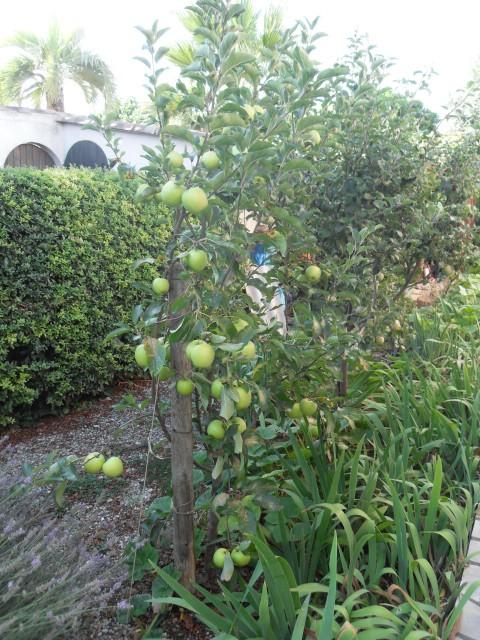 nouvelles plantations de légumes - Page 4 Sdc11242