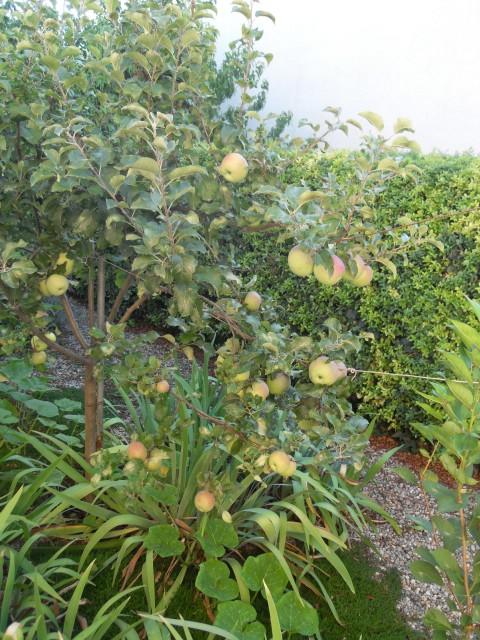 nouvelles plantations de légumes - Page 4 Sdc11243