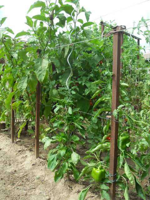 nouvelles plantations de légumes - Page 4 Sdc11310
