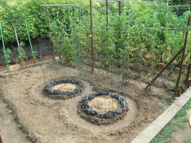 nouvelles plantations de légumes - Page 4 Sdc11312