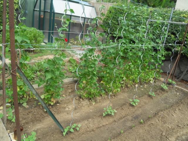 nouvelles plantations de légumes - Page 4 Sdc11314